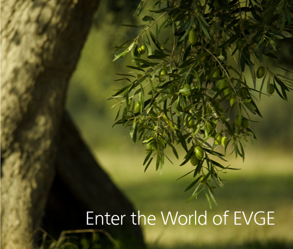 Drop into EVGE world
